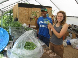 Minna & Jane bunching garlic scapes