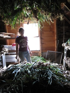 Rachel in the barn, surrounded by piles of garlic