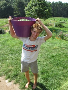 Jordan carrying a bucket full of just-picked green beans on a toasty 90 degree day