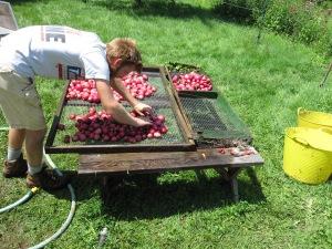 Jordan washing potatoes