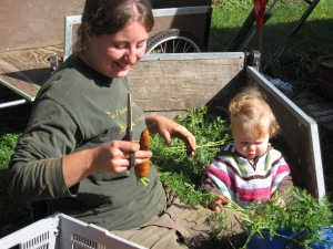 Carolyn and Cecilia, busy cleaning up carrots for the fall CSA.
