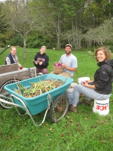 Old friends back to clean onions with us again!  R to L Corinne, Reanna, Bill and Christine.