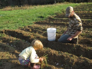 And the garlic for 2014 is now, officially, planted. Thank goodness we had such good garlic planters on hand.