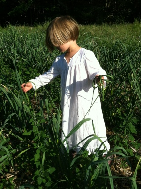 Someone wandered out to the field in her nightgown to help with the garlic scape harvest.