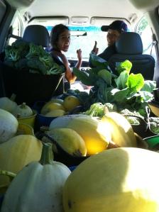 The huge winter squash harvest has begun!