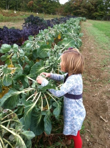 CJ in the field of brussels sprouts, determining (in some mysterious fashion) if they were ready  for harvest.