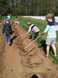 The second and third grade class from Ashwood Waldorf School visited the farm and helped us plant potatoes last Friday.